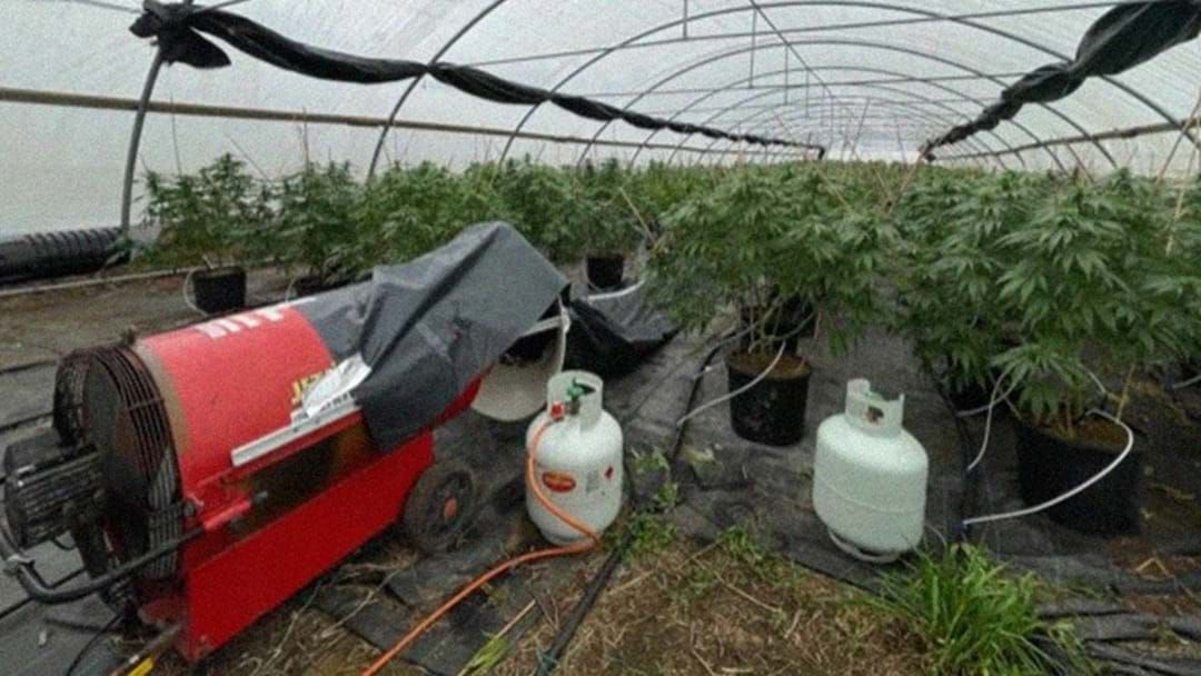 Article heading image for $3 Million Worth Of Cannabis Seized Near Gosford