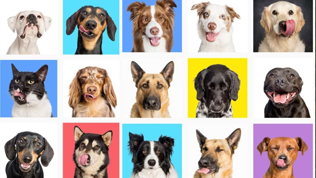 Article heading image for PSA: Your Fur Babies Are Needed For This Adorable SA Pet Photoshoot Fundraiser!