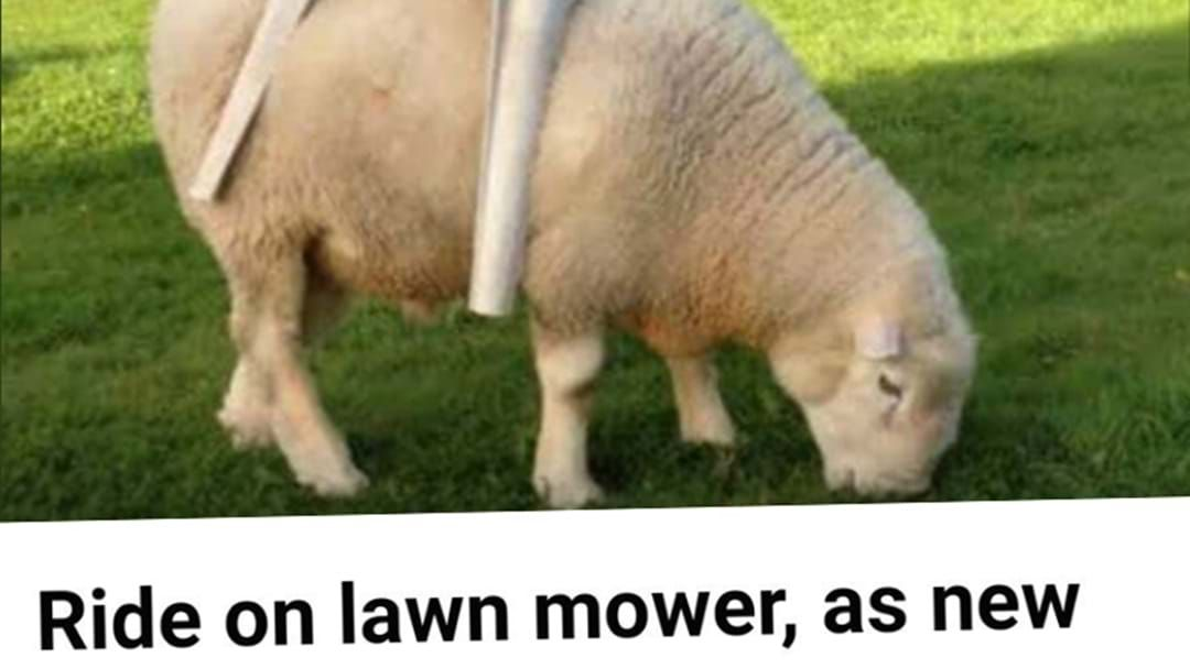Article heading image for Has The Wool Been Pulled Over Our Eyes With This Gumtree Ad?