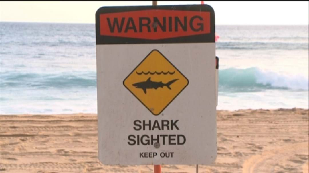 Article heading image for Shark Warning near Augusta in the Shire of Augusta-Margaret River