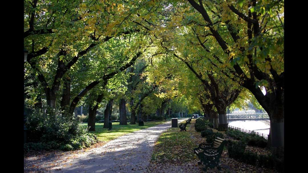Article heading image for Rosalind Park Wins Green Flag Award