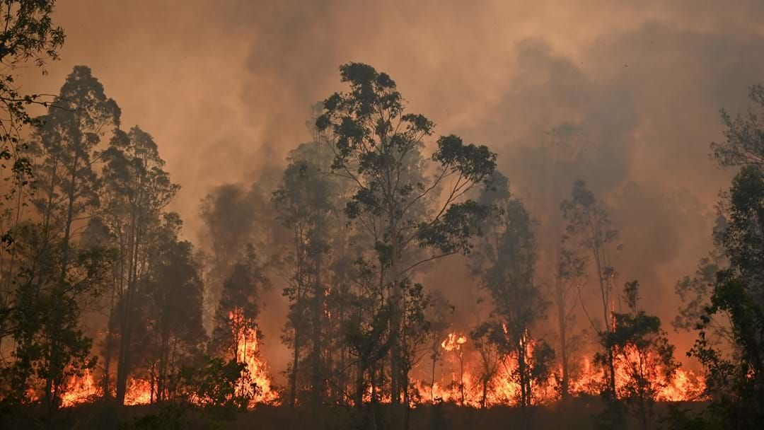 "Article heading image for Sydney Receives ""Catastrophic"" Fire Warning As Premier Declares State Of Emergency"