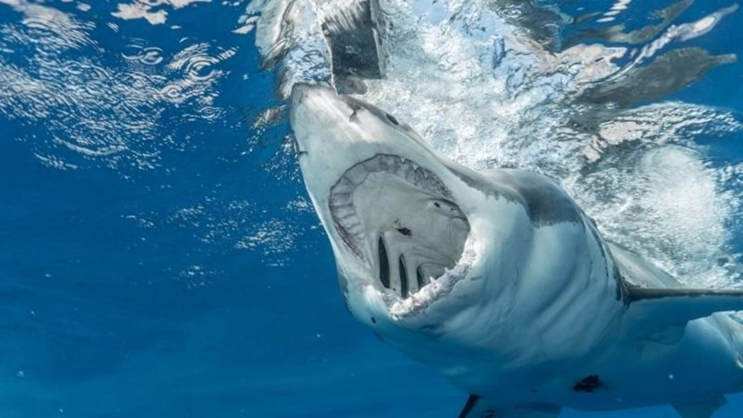 Article heading image for Pro-Surfer Has Close Encounter With Great White Off Central Coast