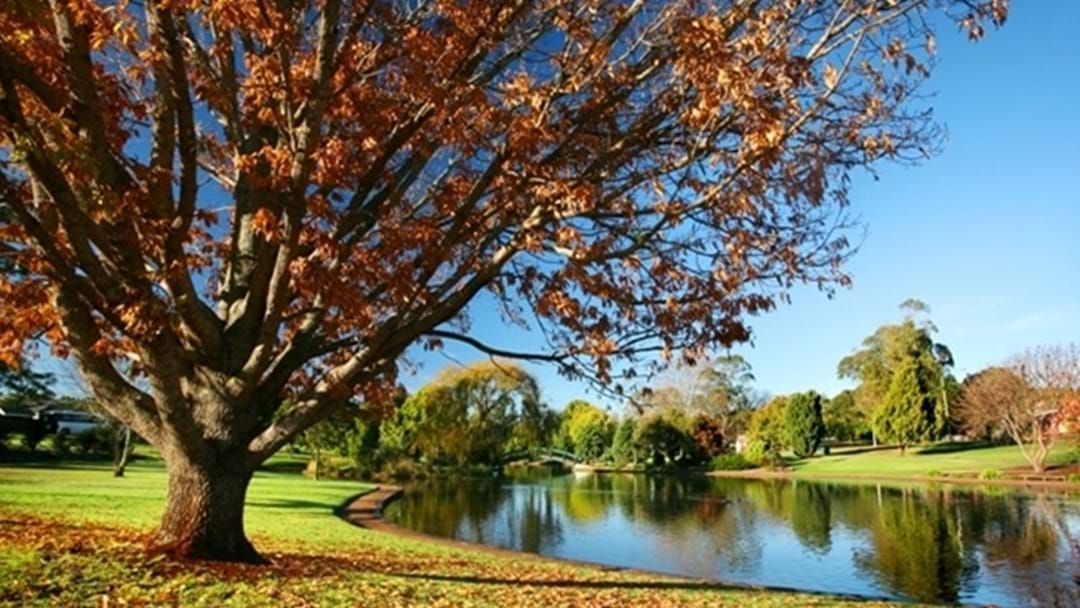Article heading image for Ken Ferrier Memorial Toowoomba World Environment Day