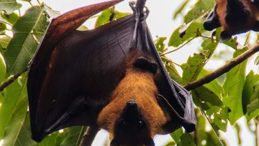 Article heading image for Are Bats Driving You Batty?