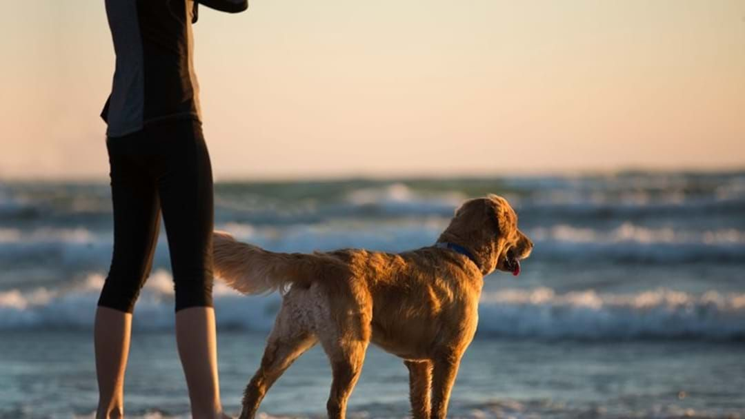 Article heading image for Your Say: Leash-Free Dog Areas Coming To Cape Paterson And Kilcunda Beaches