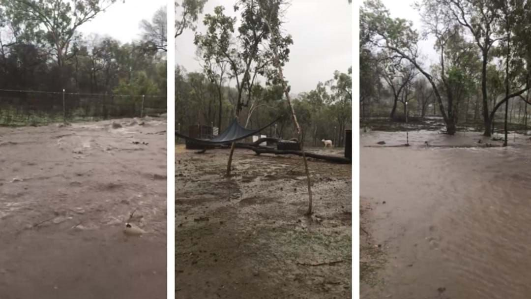 Article heading image for Townsville Animal Rescue Organisation Feeling Full Impact Of Down Pours