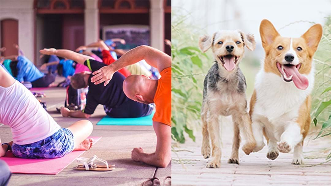 Article heading image for This Animal-Friendly Yoga Class Lets You Practice Your Downward Dog... With Actual Dogs!