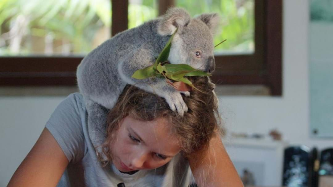 Article heading image for 13-Year-Old Koala Whisperer From QLD Is About To Get Her Own Netflix Show