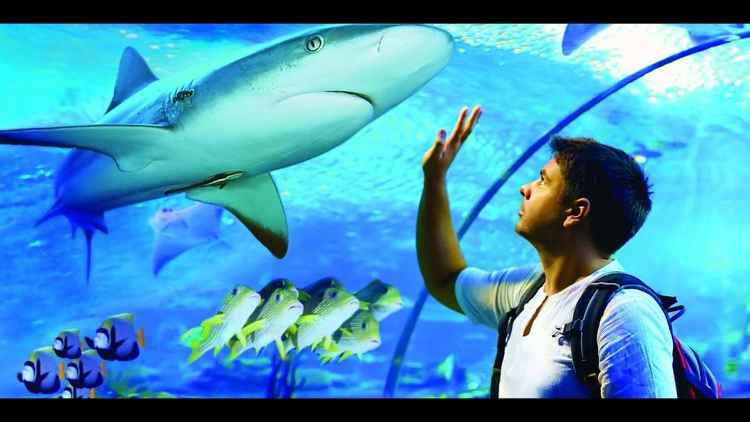 Article heading image for A game changer for the Cairns Aquarium.
