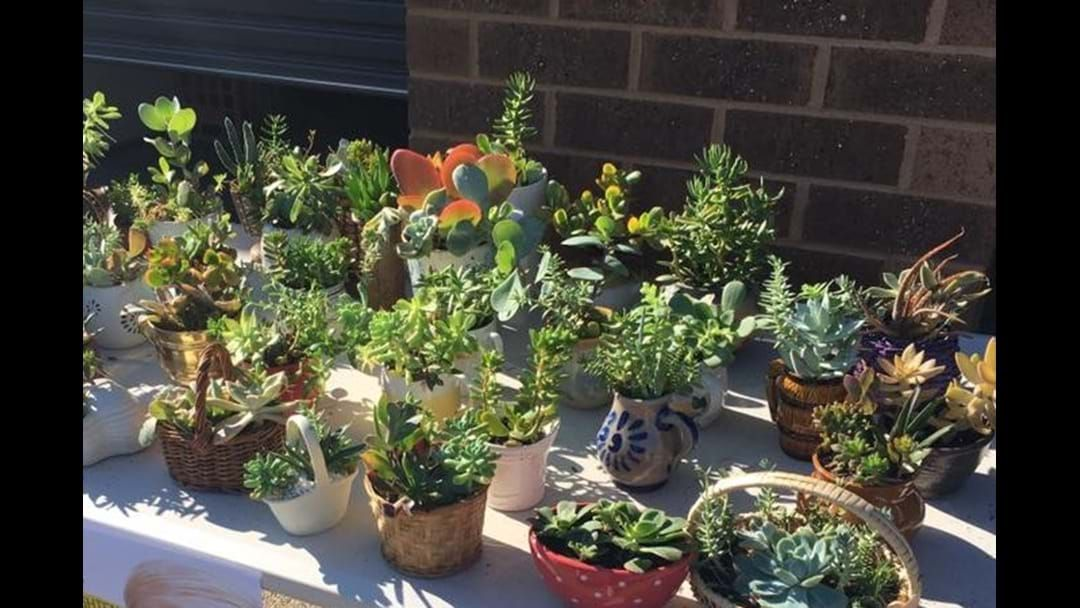 Article heading image for Check This One Day Only Succulent Sale In Shepparton This Saturday!