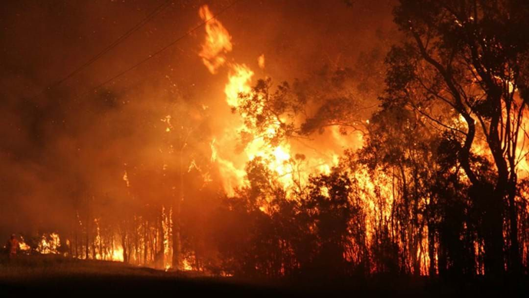 Article heading image for Police Speaking To Teens In Relation To Devastating Sunshine Coast Bushfire