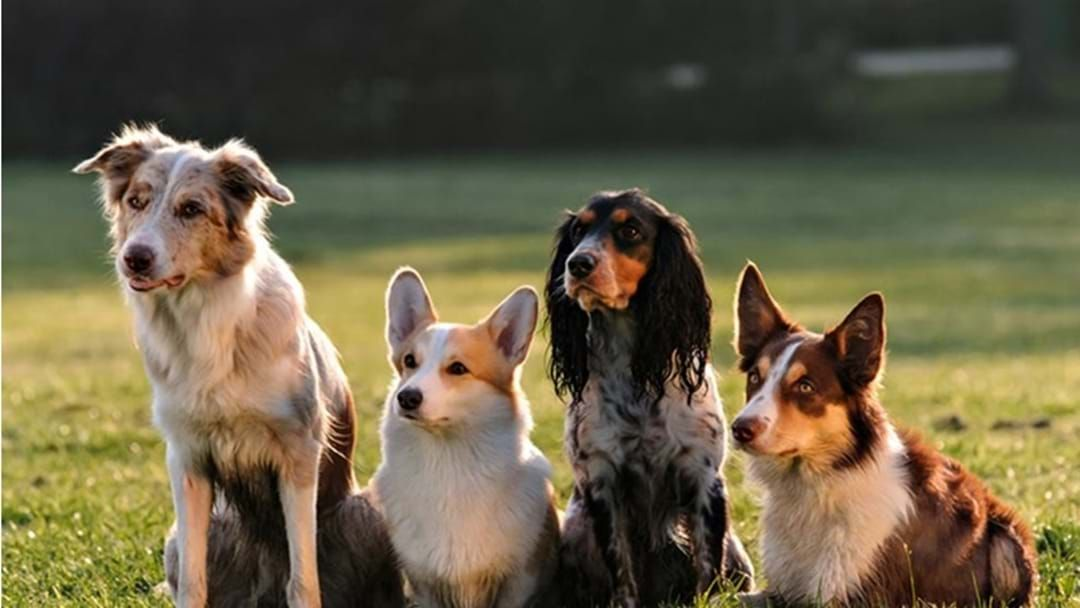 Article heading image for Fifty Three Dogs Euthanised by Local Council in Seven Months