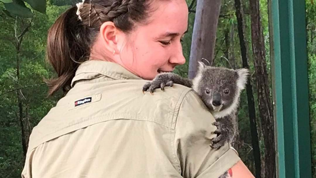 Article heading image for WILD LIFE Sydney Zoo Has Named Their Precious New Koala Joey!
