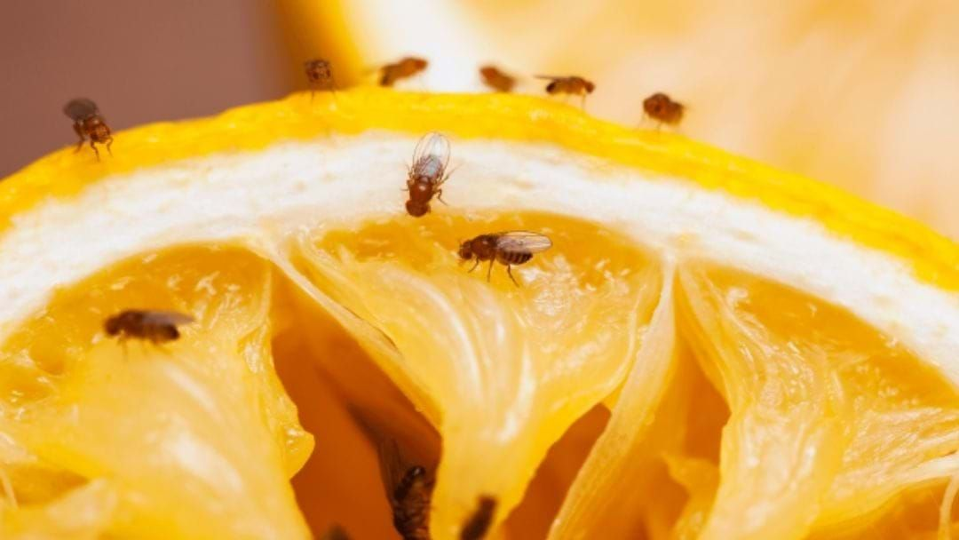 Article heading image for Fruit Fly Tree Removal Works Are Underway In Shepparton