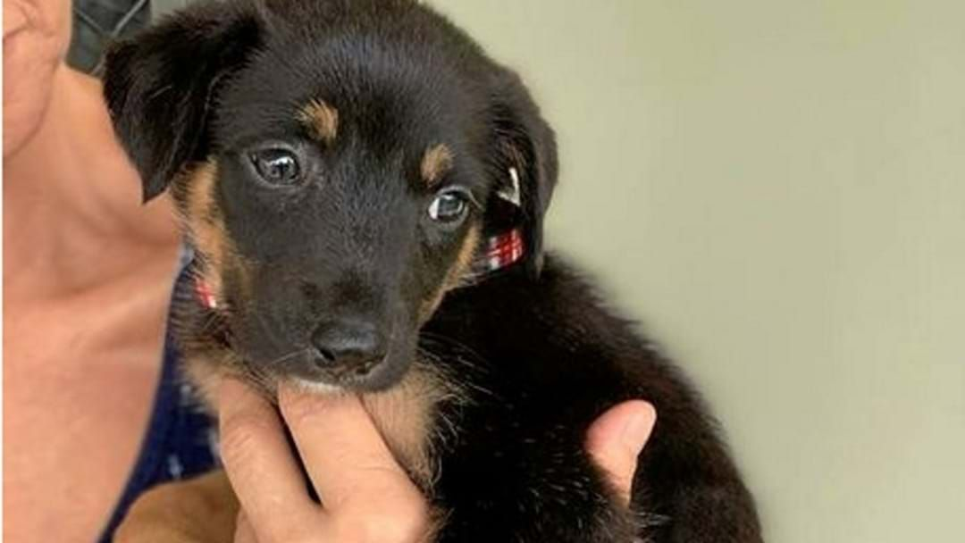 Article heading image for Puppy Dumped And Left To Fend For Itself