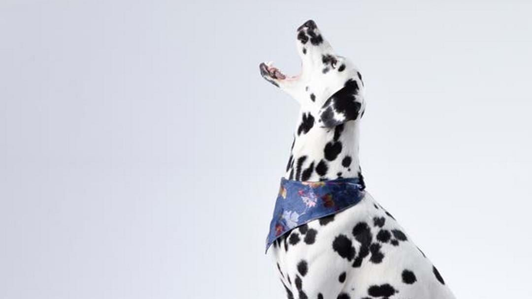 Article heading image for RACQ Pet Search Is On, So Enter Your Townsville Pets