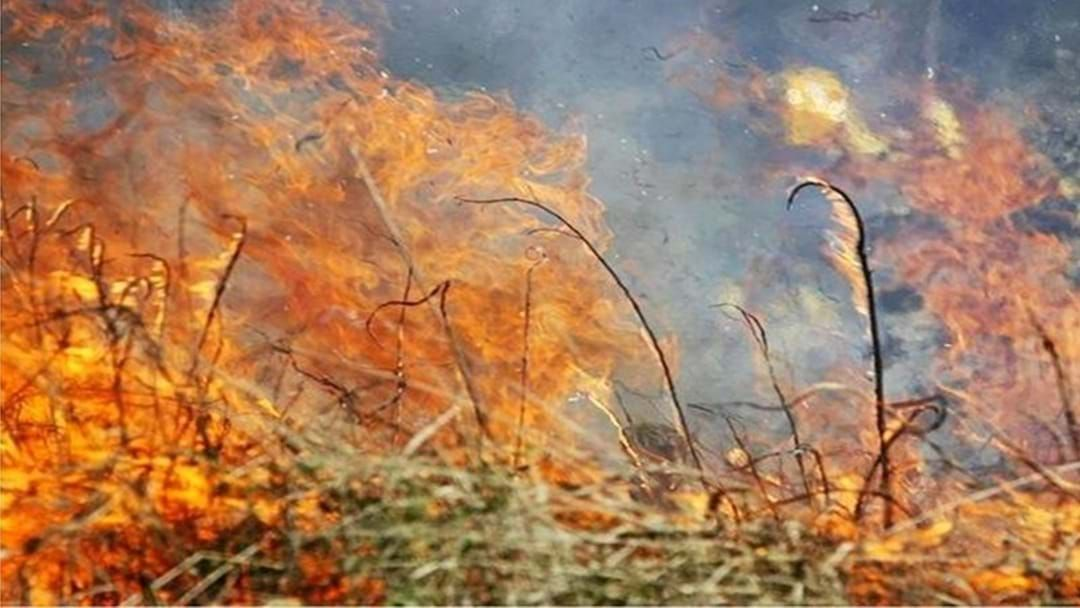 Article heading image for BUSHFIRE: Residents On High Alert As Blaze Burns South Of Canungra