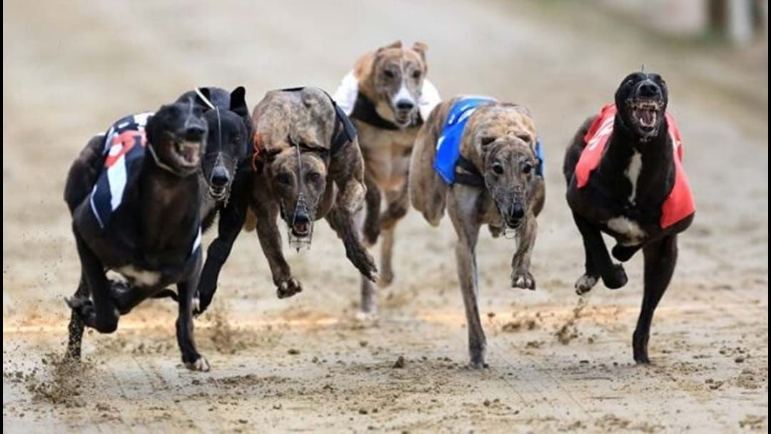 Article heading image for Meet Jack Riewoldt And Experience The World Of Greyhound Racing At The Warragul Cup