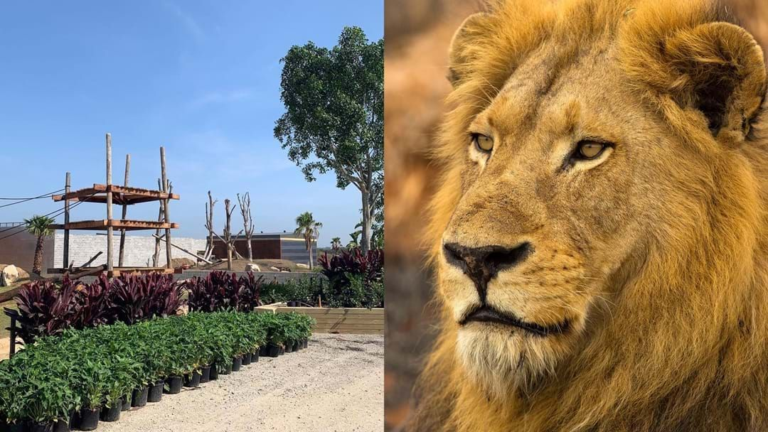Article heading image for Sydney Zoo's Opening Date Is Finally Here & Tickets Are On Sale Now!
