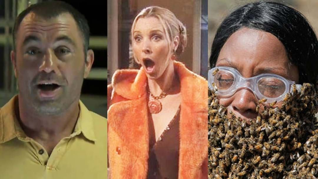 Article heading image for Cliffo & Gabi Chat To The Director Of 2000s Reality Show Fear Factor!