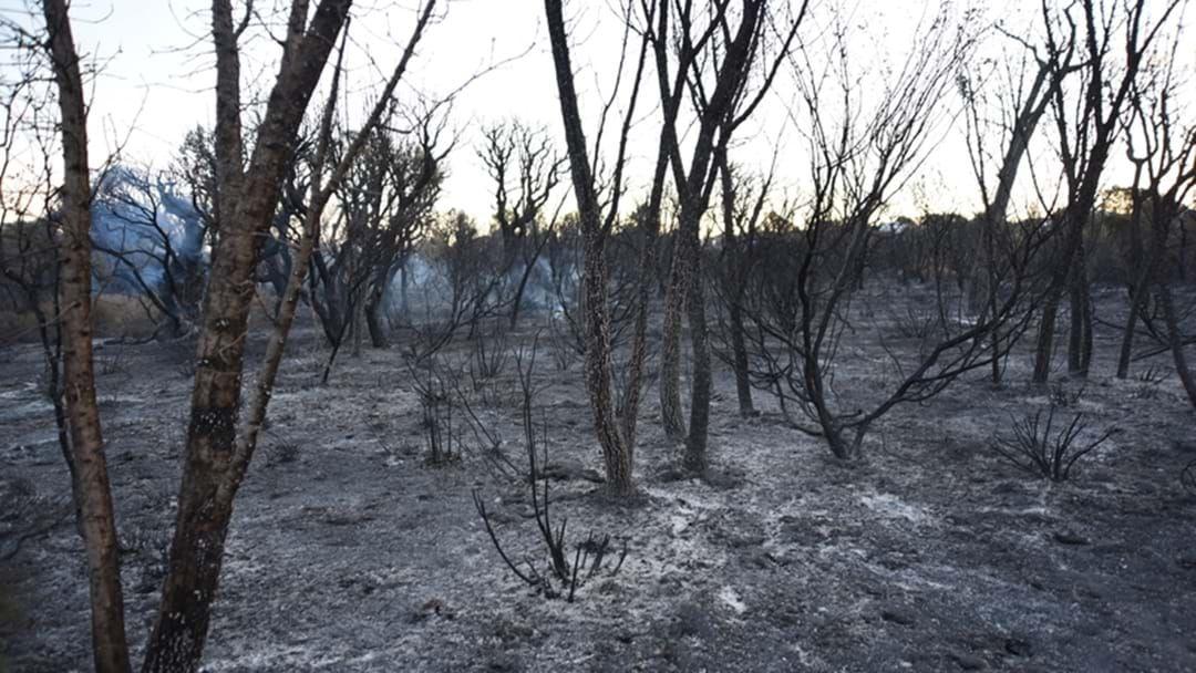 Article heading image for Arsonist Blamed For Ellenbrook Fire
