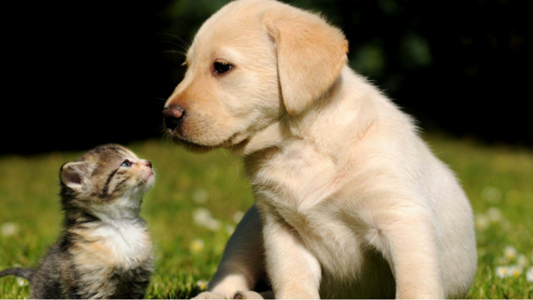 Article heading image for New Laws For Dog And Cat Owners in Adelaide
