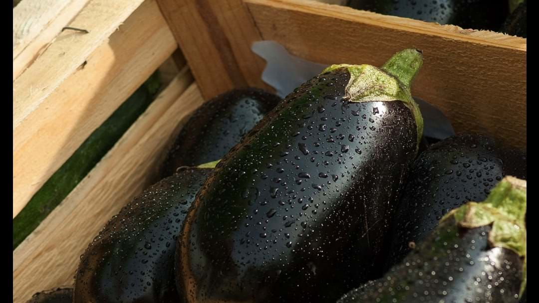 Article heading image for Man Accused Of Murder Blames Rogue Eggplant For Firing Gun