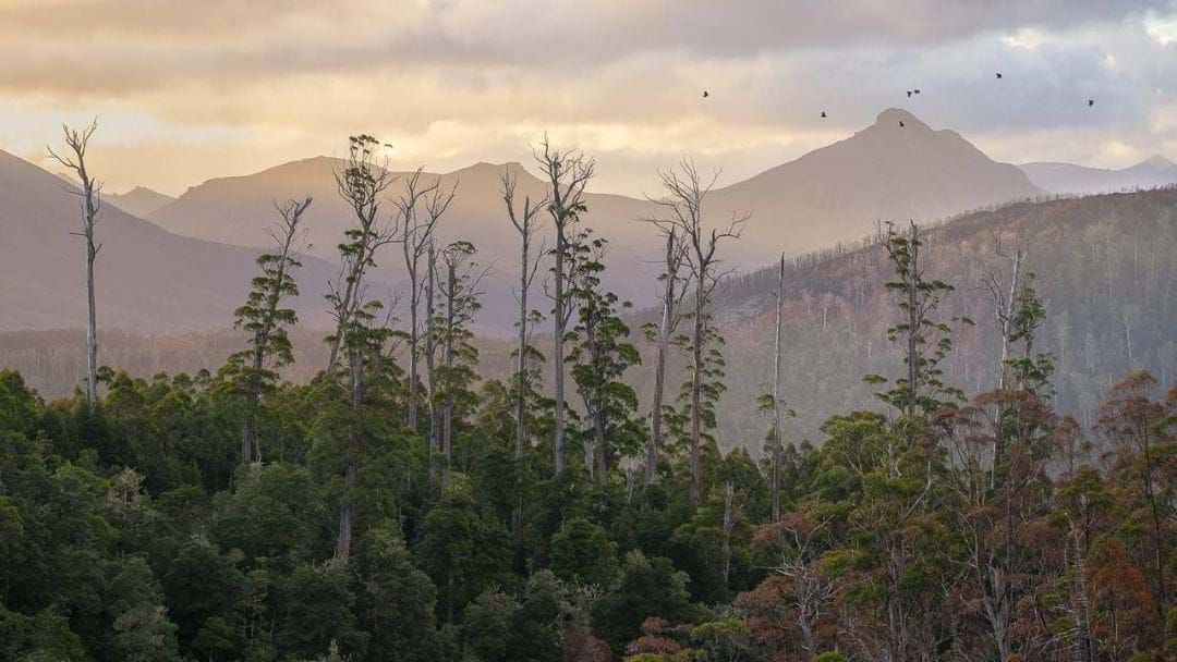 Article heading image for Hobart Photographer Named 2019 AIPP Australian Professional Photographer Of The Year