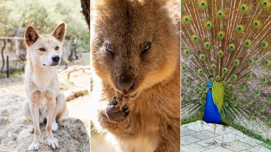 Article heading image for Bunbury Wildlife Park To Reopen Doors In July With Revised Operating Hours