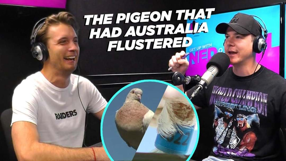 Article heading image for The Pigeon that had Australia flustered