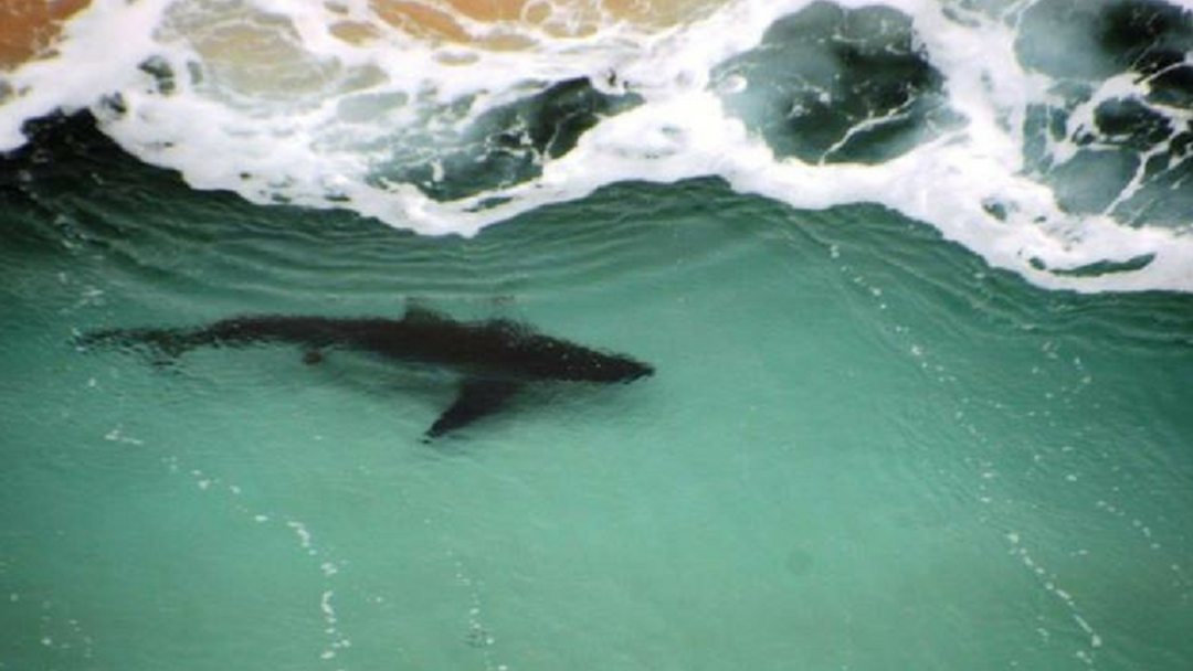 Article heading image for WA's Shark Watch Network Will Now Include The Capes Region