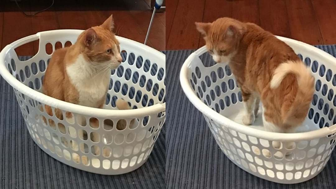 Article heading image for Ginger Cats Are Half Price At The Moment In Townsville
