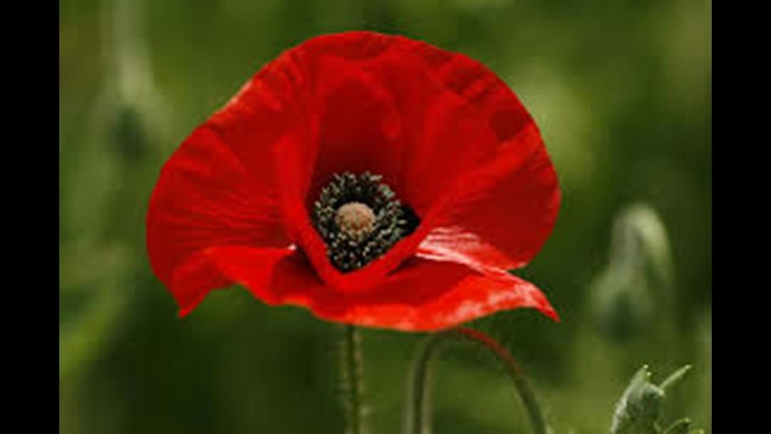 Article heading image for Here Are The Remembrance Day Services Happening Around Bendigo This Sunday