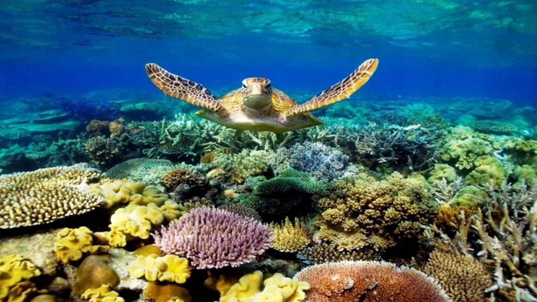 """Article heading image for Great Barrier Reef In Danger Of Being Labelled """"Endangered"""""""