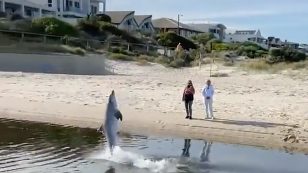Article heading image for Stranded Dolphin Puts On A Show For Bewildered Locals