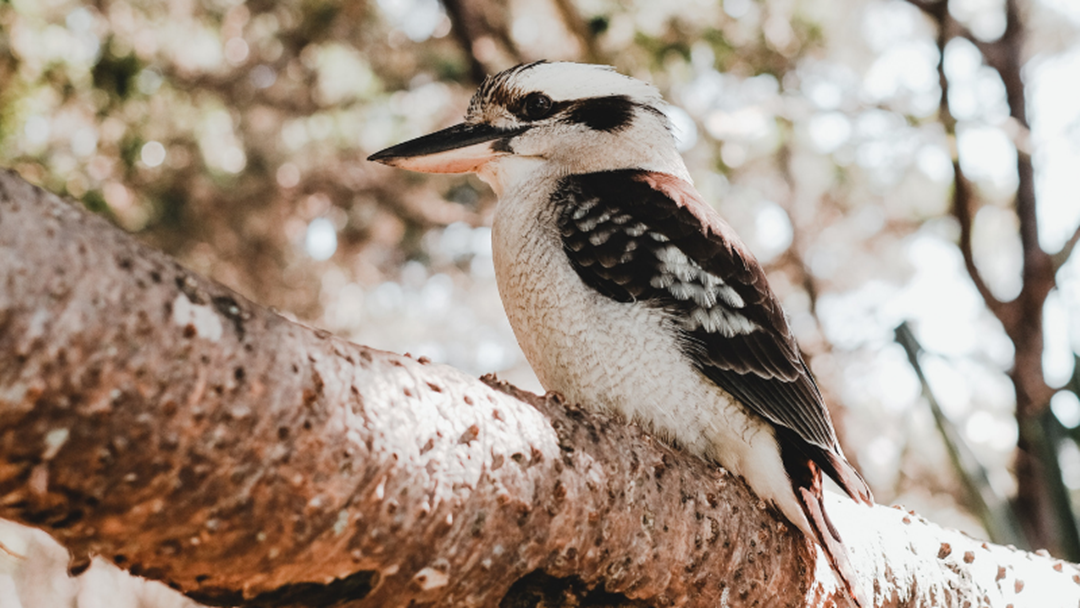 Article heading image for Bird Counting Begins As Australia's Largest Citizen Science Event Kicks Off