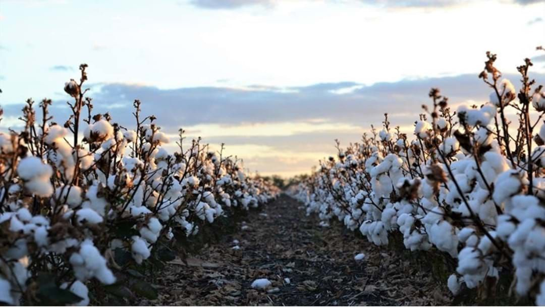 Article heading image for Cotton Australia Statement On Fish Deaths At Menindee