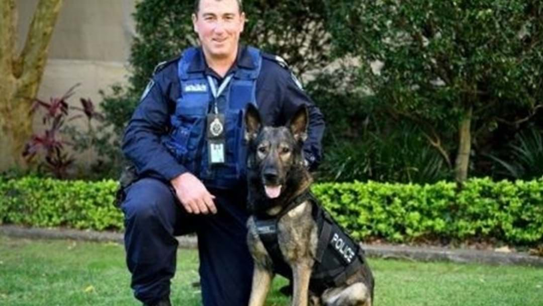 Article heading image for Police Dog Kaleb Dies While On Duty