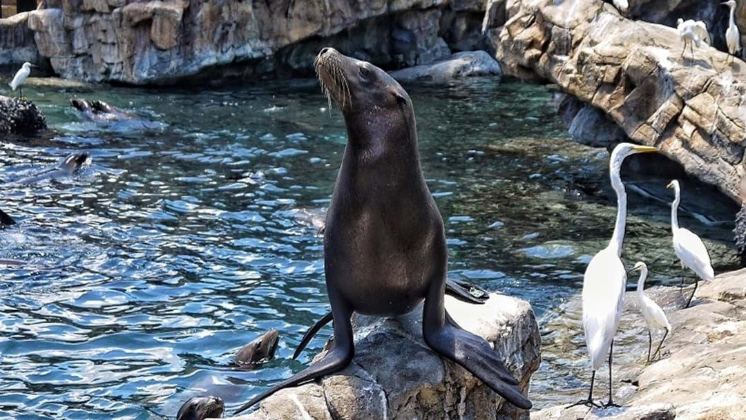 Article heading image for Central Coast Residents Warned To Stay Away From Growing Number Of Seal Population