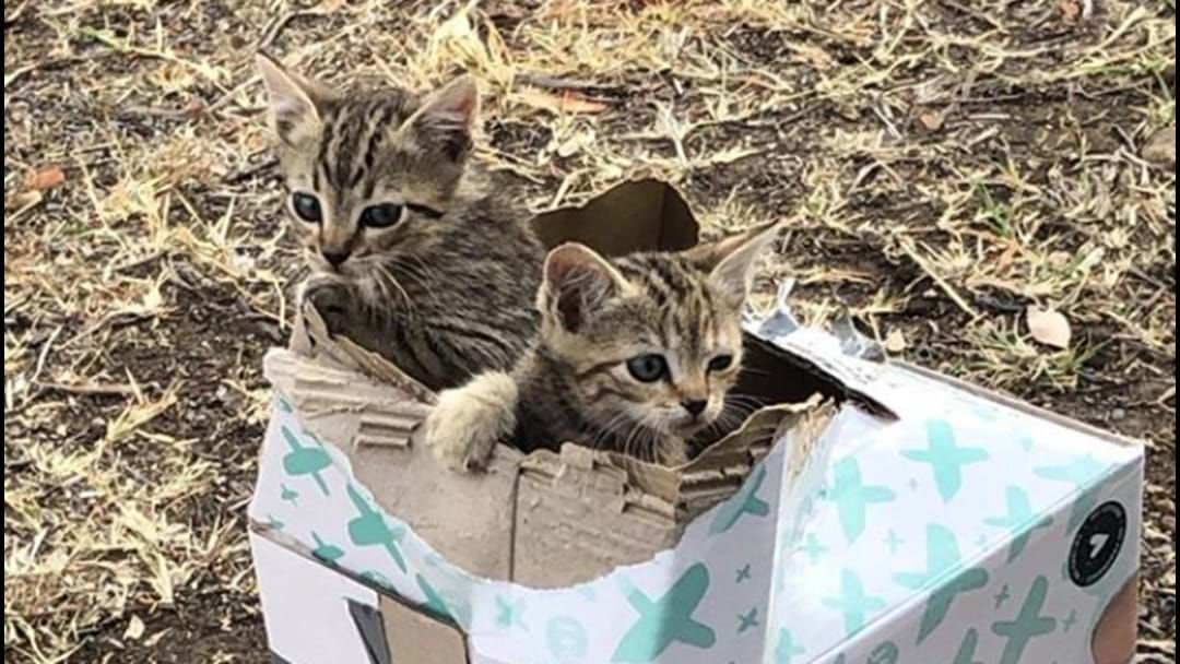 Article heading image for Kittens Left For Dead In Taped-Up Box