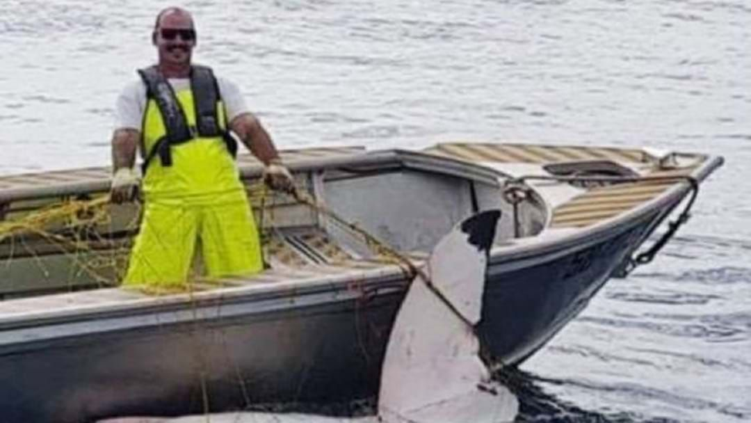 Article heading image for Massive 4.65 Metre Great White Shark Found Dead In Maroubra