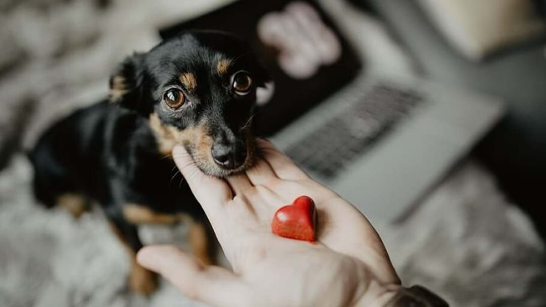 Article heading image for 5 ways to up your pet-owner cred