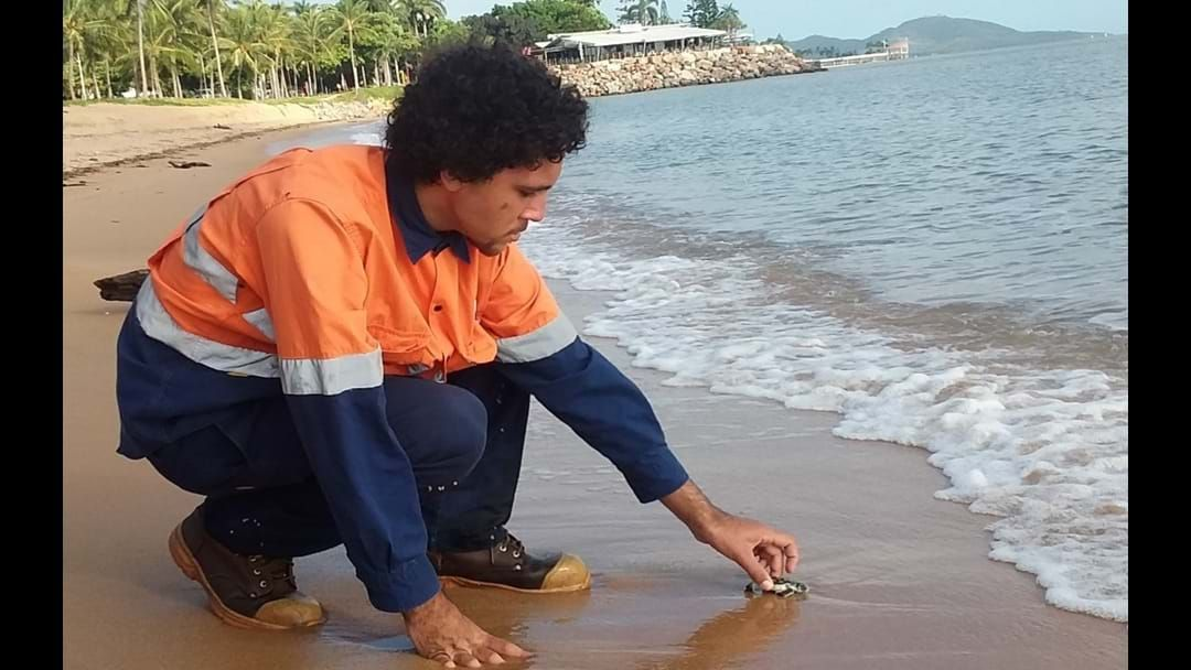Article heading image for Pass The Kleenex, Council Have Helped Lost Turtle Hatchlings Into The Ocean