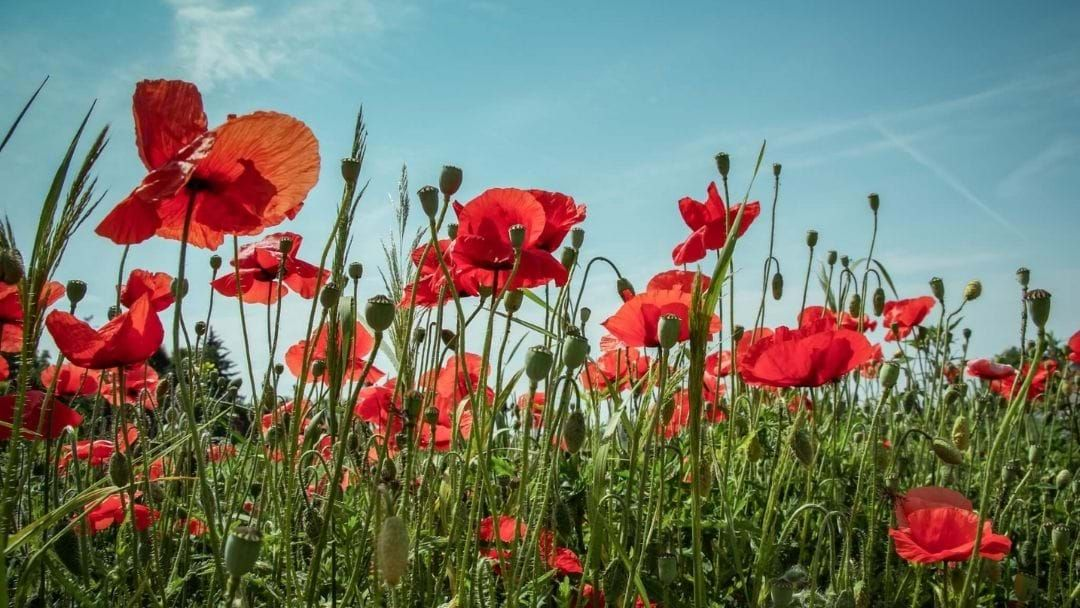 Article heading image for Here Are The States Observing A Public Holiday For Anzac Day In 2020