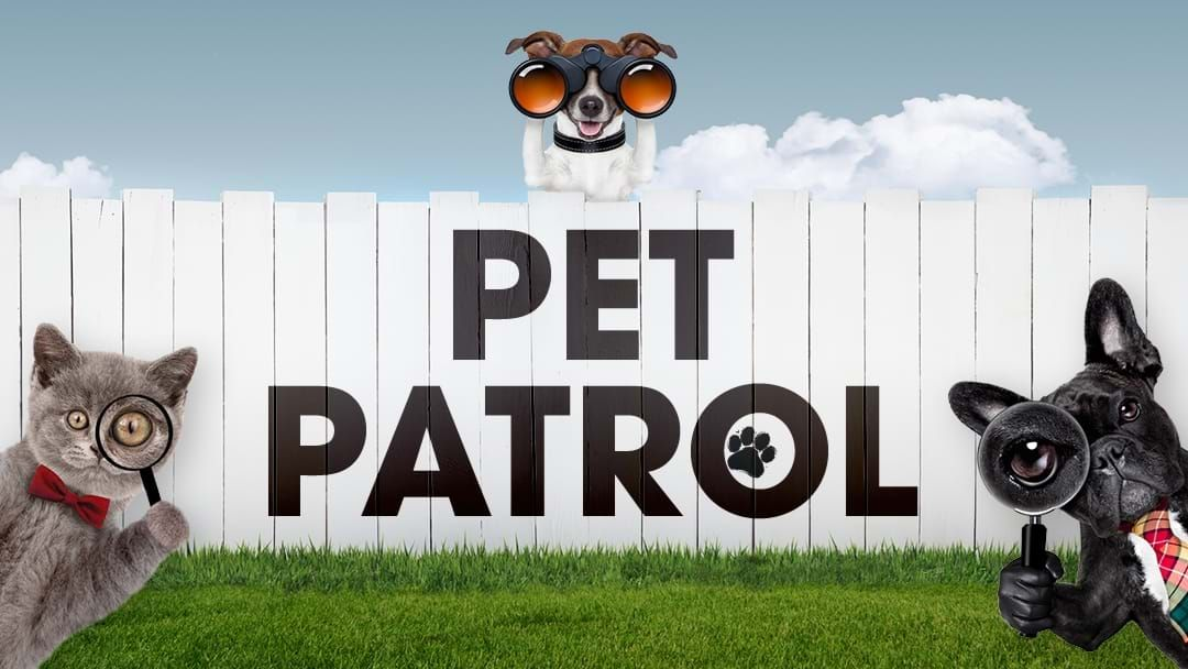 Article heading image for Triple M Pet Patrol