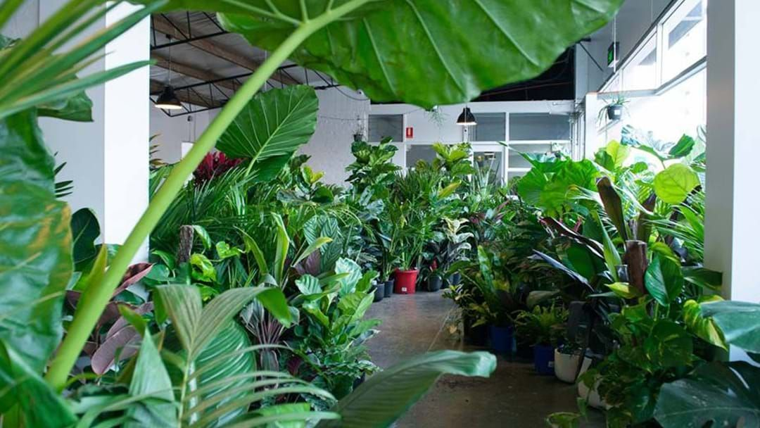 Article heading image for A Massive Indoor Plant Warehouse Sale Is Coming To Sydney