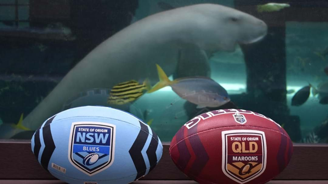 Article heading image for Pig The Dugong Has Predicted The State Of Origin Game 2 Winner