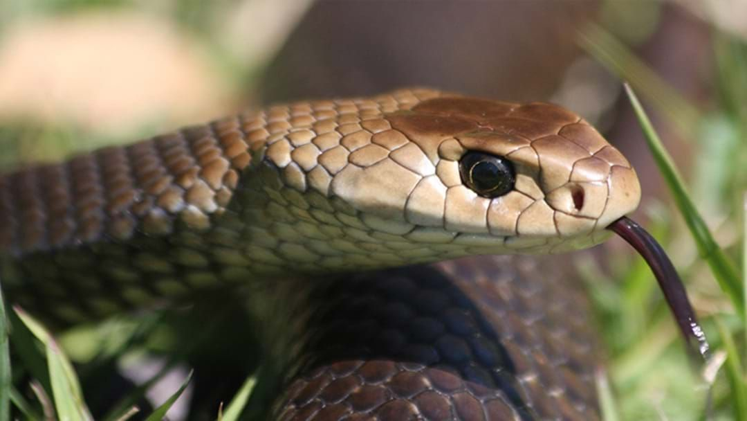 Article heading image for Sydney Residents Warned About Increased Snake Risk