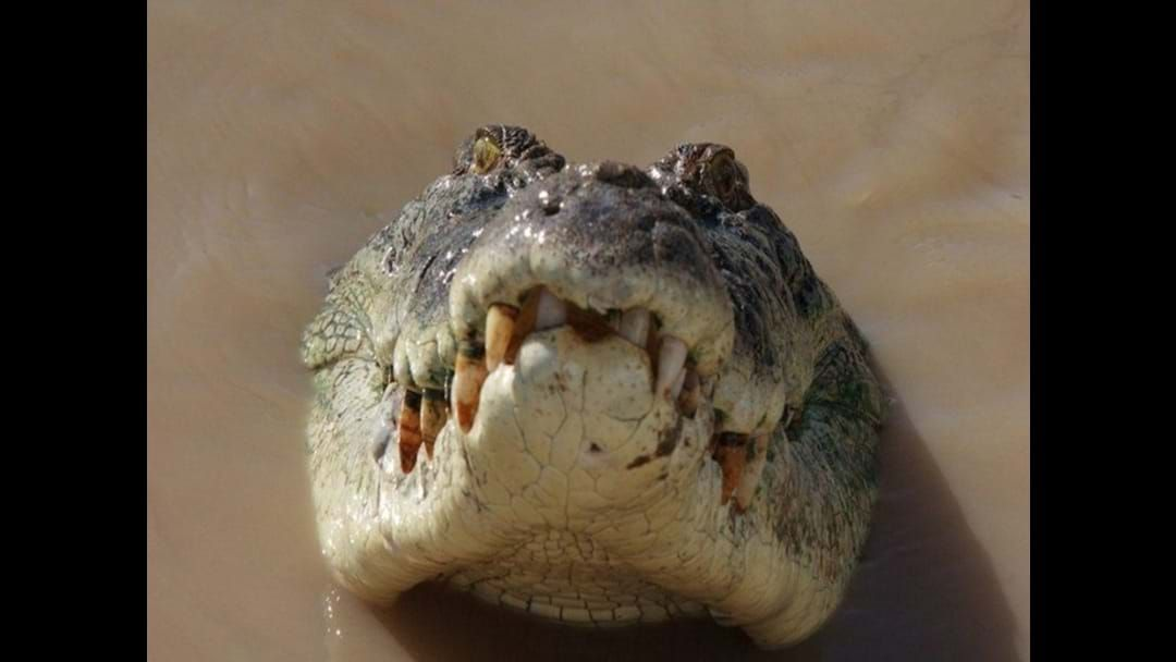 Article heading image for Does FNQ want a Croc Cull?